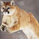 """AMD Mullins y Beema se basaran en la nueva arquitectura de bajo consumo """"Puma"""""""