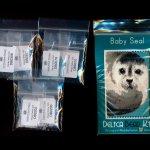 baby seal small panel peyote seed bead pattern pdf or kit diy maddiethekat designs 2