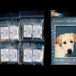 golden labrador dog small panel peyote seed bead pattern pdf or kit diy maddiethekat designs 2
