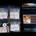 maine coon cat tiny mini amulet bag peyote seed bead pattern pdf or kit diy maddiethekat designs 2
