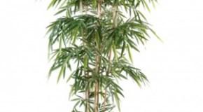 Comment se cacher du voisin avec des plantes artificielles ?