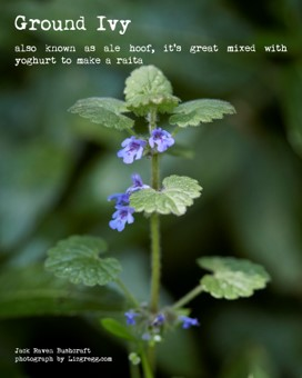 wild flowers | Kent Downs | herbal remedies | traditional remedies