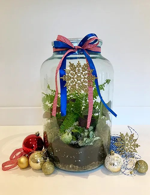 Christmas terrarium making workshop
