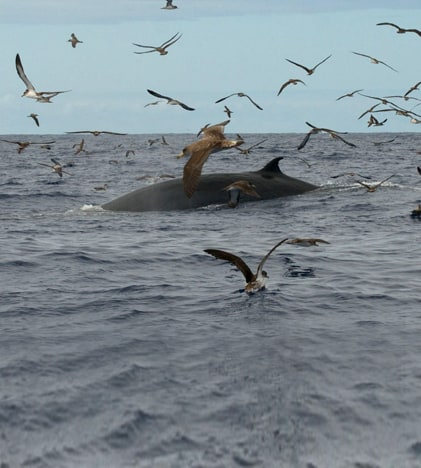 dolphinsmadeira