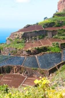 Madeira Gemüseanbau