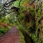 Mountainbike Madeira