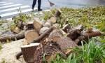 Tree Falls in Caniço