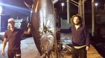 TUNA OF 404 KILOS HITS RECORD IN FUNCHAL