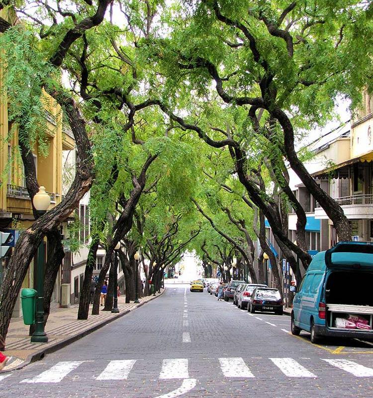 Madeira Funchal straten bomen