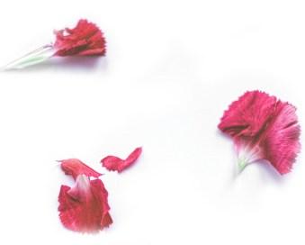 fleur-rouge2