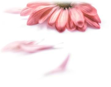 fleur-rouge4c