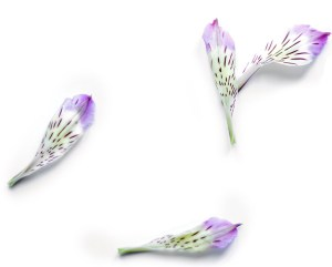 fleur31