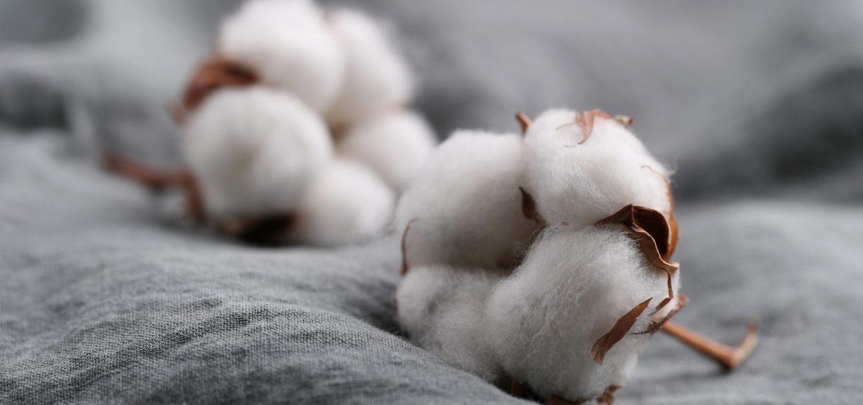 coton bio mode éthique