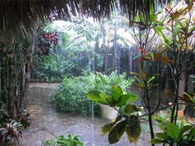 pluie_tropicale