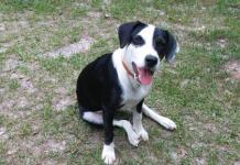Image of aubrey the dog