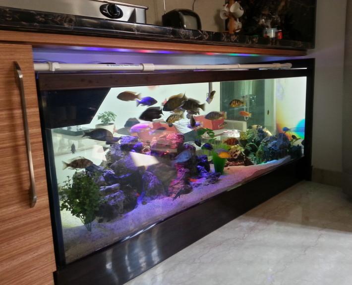 An artistic Aquarium designed in a Posh bungalow.