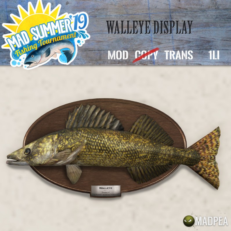A Walleye on the Wall!