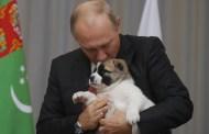 Alabai, il cane simbolo del Turkmenistan