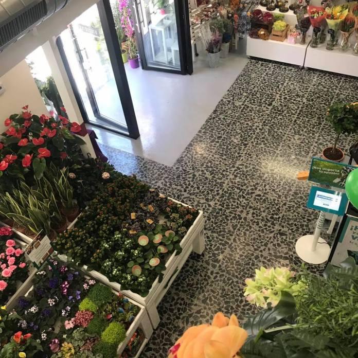 Locura por los cactus en Madrid: cuatro tiendas donde no pincharás 4