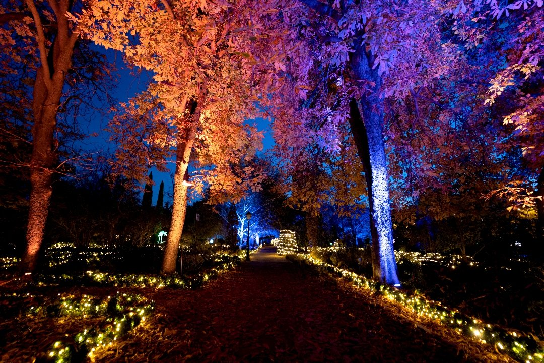 La luz navideña enciende el Jardín Botánico 1