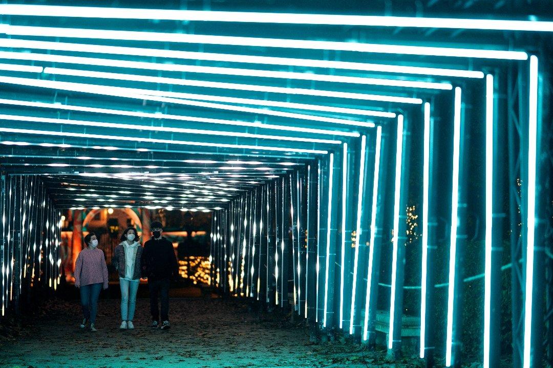 La luz navideña enciende el Jardín Botánico 8