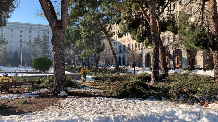 Filomena deja Madrid huérfana de árboles 1