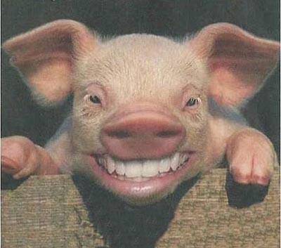 Resultado de imagen de fotos de cerdos