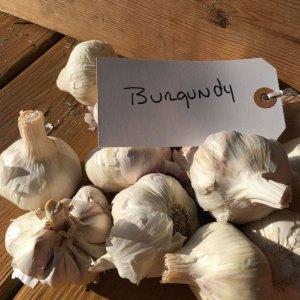 BURGUNDY GARLIC