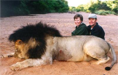 STOUT lion.2