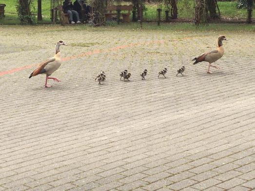"""Always straight on - so wie diese Besucher des Oberstufenhofes... dann """"laufen"""" die Abiturprüfungen bestimmt gut!"""
