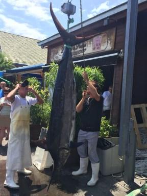 Marlin bleu de 103Kg.
