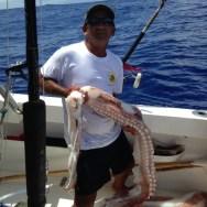 Calamar géant trouvé mort et estimé à plus de 200Kg