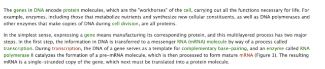 The intricate association between mRNA and DNA...