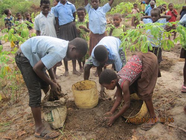 Manure for cassava plants