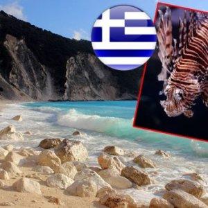 СТРАШНО: Бидете внимателни, отровна риба се појави на крајбрежјето на Неи Пори и Паралија