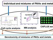 Genotoxicity evaluation of multi-component mixtures of PAHs and metals