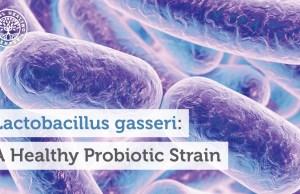 Lactobacillus-gasseri Source : globalhealing.com