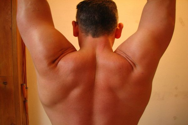 Bicep Muscles