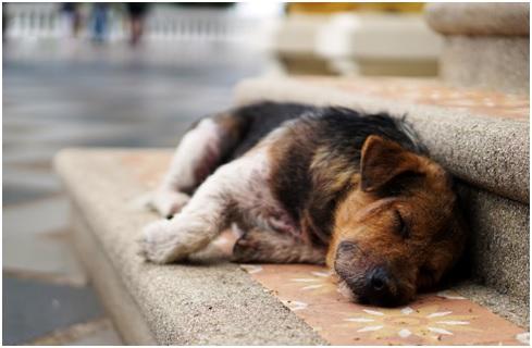 dog behavior guide