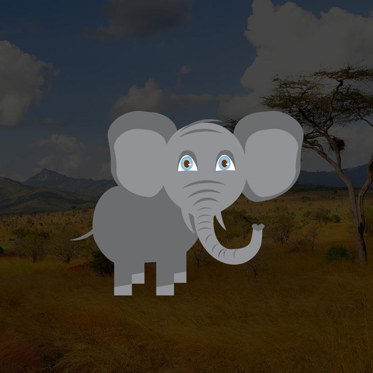 wildlifeelephant