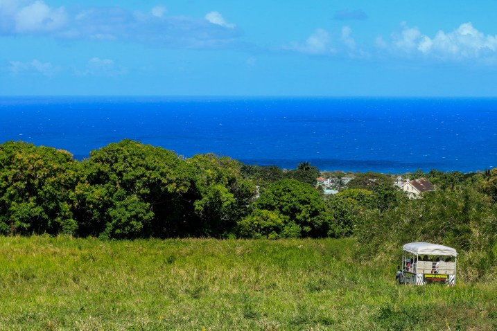 Heading down the mountainside on St. Kitts.