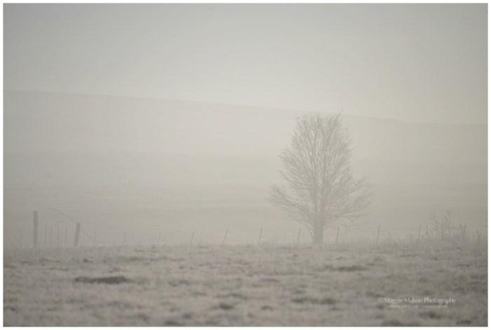 WinterBeautyDSC_0464__WEB