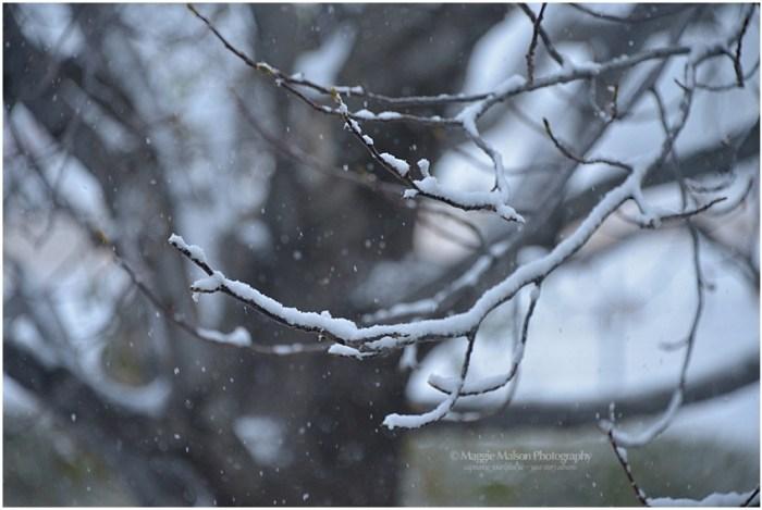snowtreedsc_7069_web