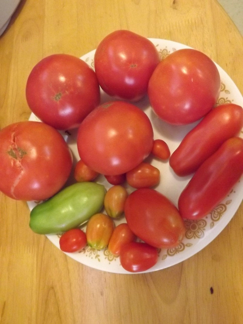 Plate of ripe tomatoes, four varieities.