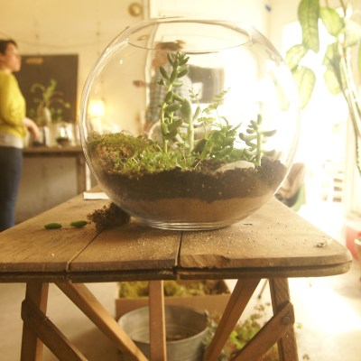 {saturday craft: how to make a Terrarium}