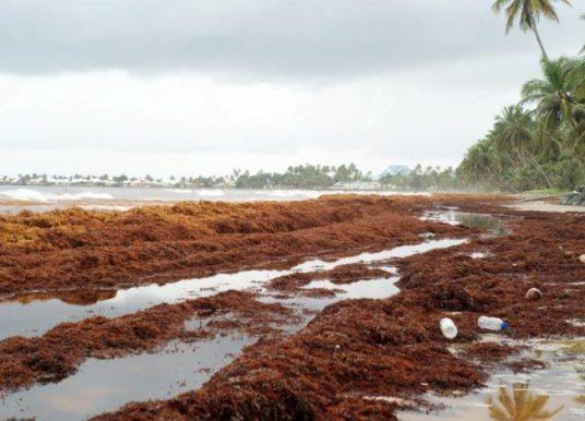 Tobago Gears Up to Fight Sargassum Invasion