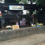 【写真日記】ツガルさん、今までありがとう:野毛山動物園【iPhone5sはお散歩カメラ】