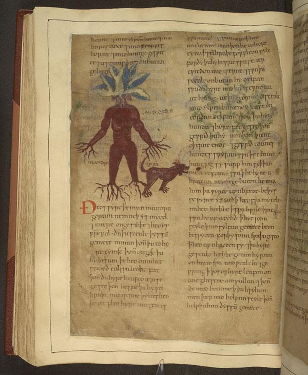 mandrake old manuscript
