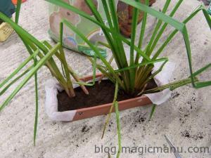 Blog de magicmanu : Aménagement de notre maison, Bassin de jardin - plantations