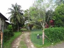 the view into Apa Kaba guesthouse garden Melaka